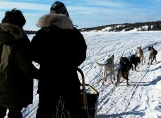 Dog Sledding (November-April)