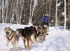 Dog Sled Ride Experience (November-April)